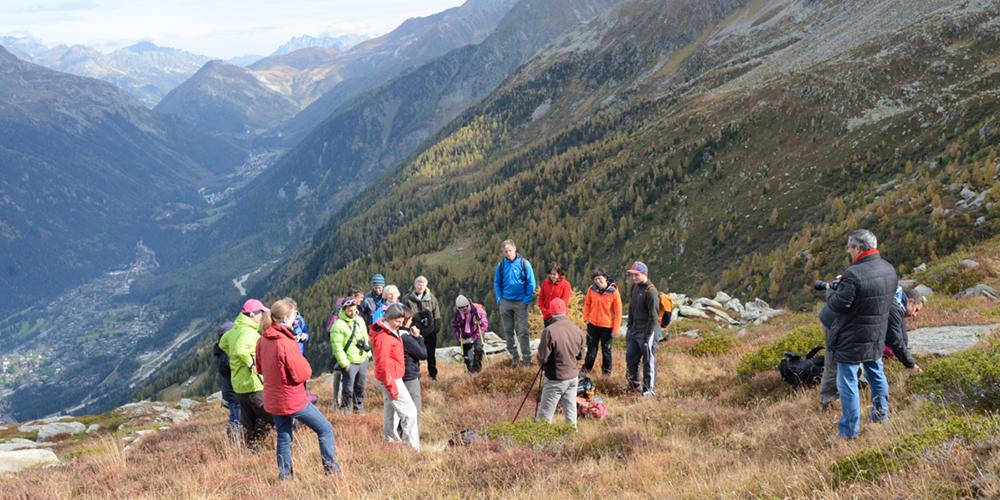 Découverte des protocoles d'observation de la végétation avec les chercheurs au Plan de l'Aiguilles (Massif du Mont-Blanc) © CREA Mont-Blanc