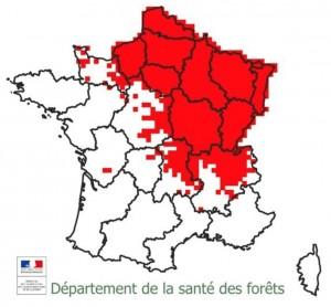Répartition de la chalarose en France en 2015, département de la santé des forêts