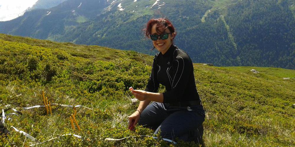 Plantation de thé à Loriaz avec le LECA Grenoble le 6 juillet dernier pour étudier la décomposition de la litière © CREA Mont-Blanc