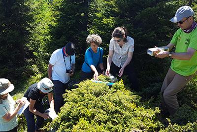 Suivi des micromammifères (campagnols...) grace à l'installation de pièges à encre © CREA Mont-Blanc