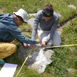 Collecte de données de végétation avec des volontaires © CREA Mont-Blanc