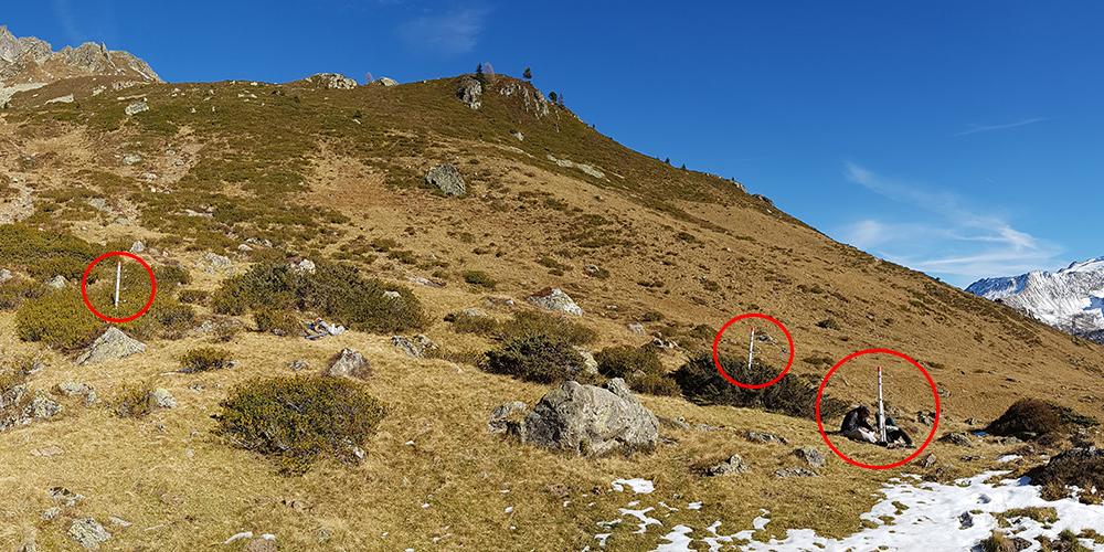 Le site de Loriaz, avec les mats installés dans les trois types de végétation, de gauche à droite : rhododendron, genévrier et nard raide © CREA Mont-Blanc