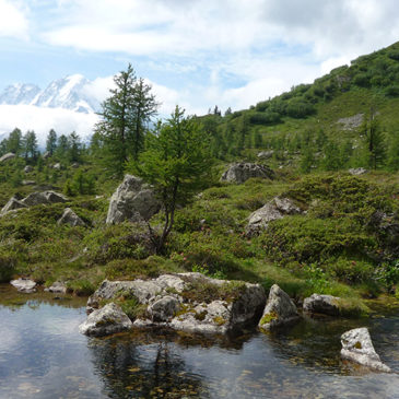 Climate in the Alps: past, present and future
