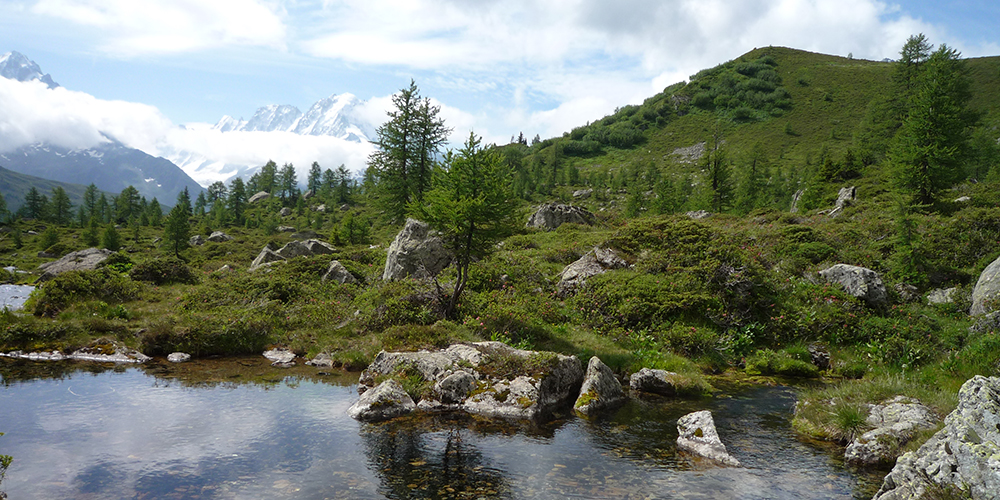 Écosystème alpin à la limite altitudinale de la forêt (mélèzes) © CREA Mont-Blanc
