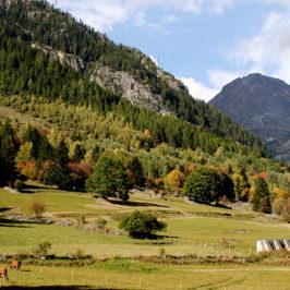Zone d'étude Phénoclim du Siseray, hameau de Vallorcine - mi-septembre 2017© CREA Mont-Blanc