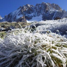 Gel tardif : menace sur les plantes alpines ?
