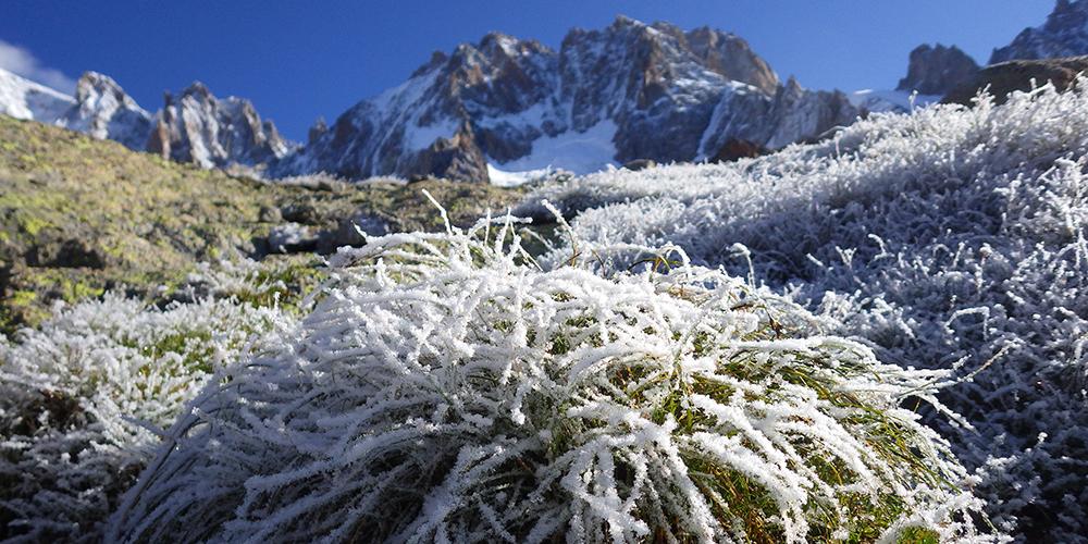 Pelouse alpine au Jardin de Talèfre, dans le Massif du Mont-Blanc (2 800 m) © CRandin