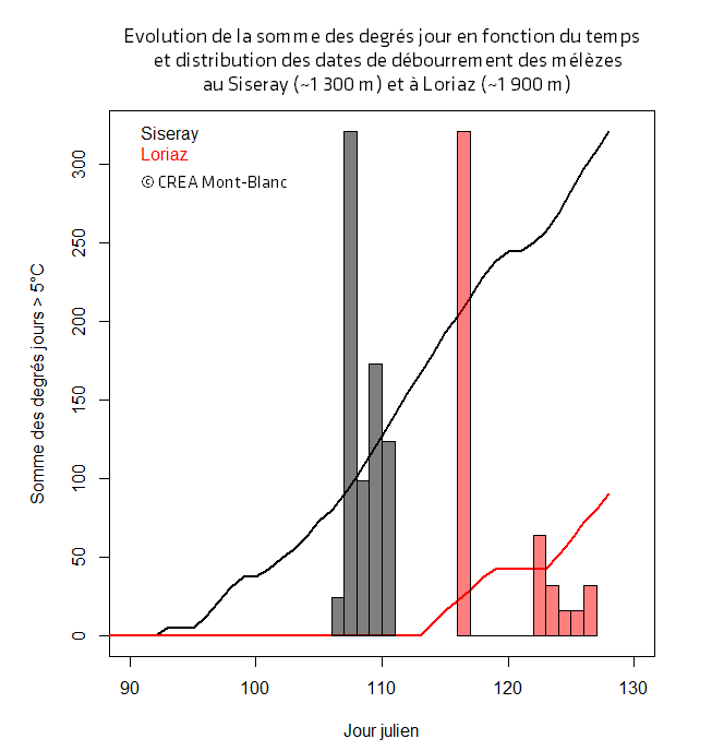 Évolution de la somme des degrés jour en fonction du temps et distribution des dates de débourrement des mélèzes au Siseray (environ 1300 m) et à Loriaz (environ 1900 m) © CREA Mont-Blanc