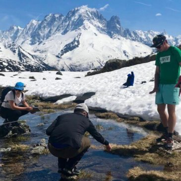 How alpine wetlands are changing with the climate