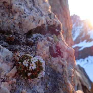 ZAA, le rendez-vous des chercheurs sur les écosystèmes alpins
