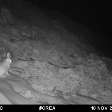 Camera traps: the contribution of artificial intelligence and the general public to our research