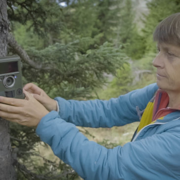 How Camera Traps Significantly Increase our Means of Observation