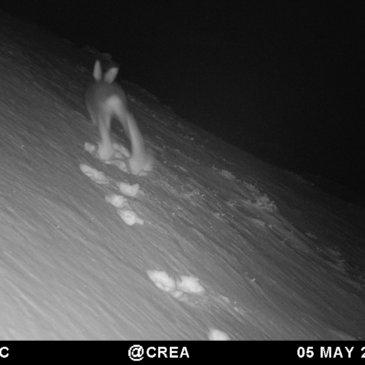 Wild Mont-Blanc Saison 2 – C'est parti !