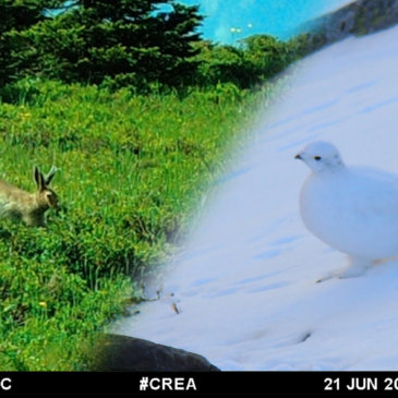 Arctic-alpine species in the face of climate change.
